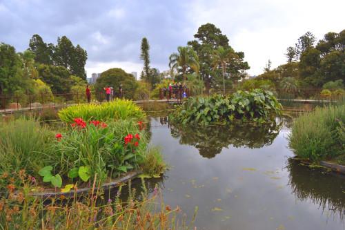 Jardin botanique avec technique de phytoremédiation à Melbourne. Crédit : Catalina Dobre